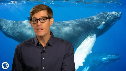 Amazing Stories of Whales