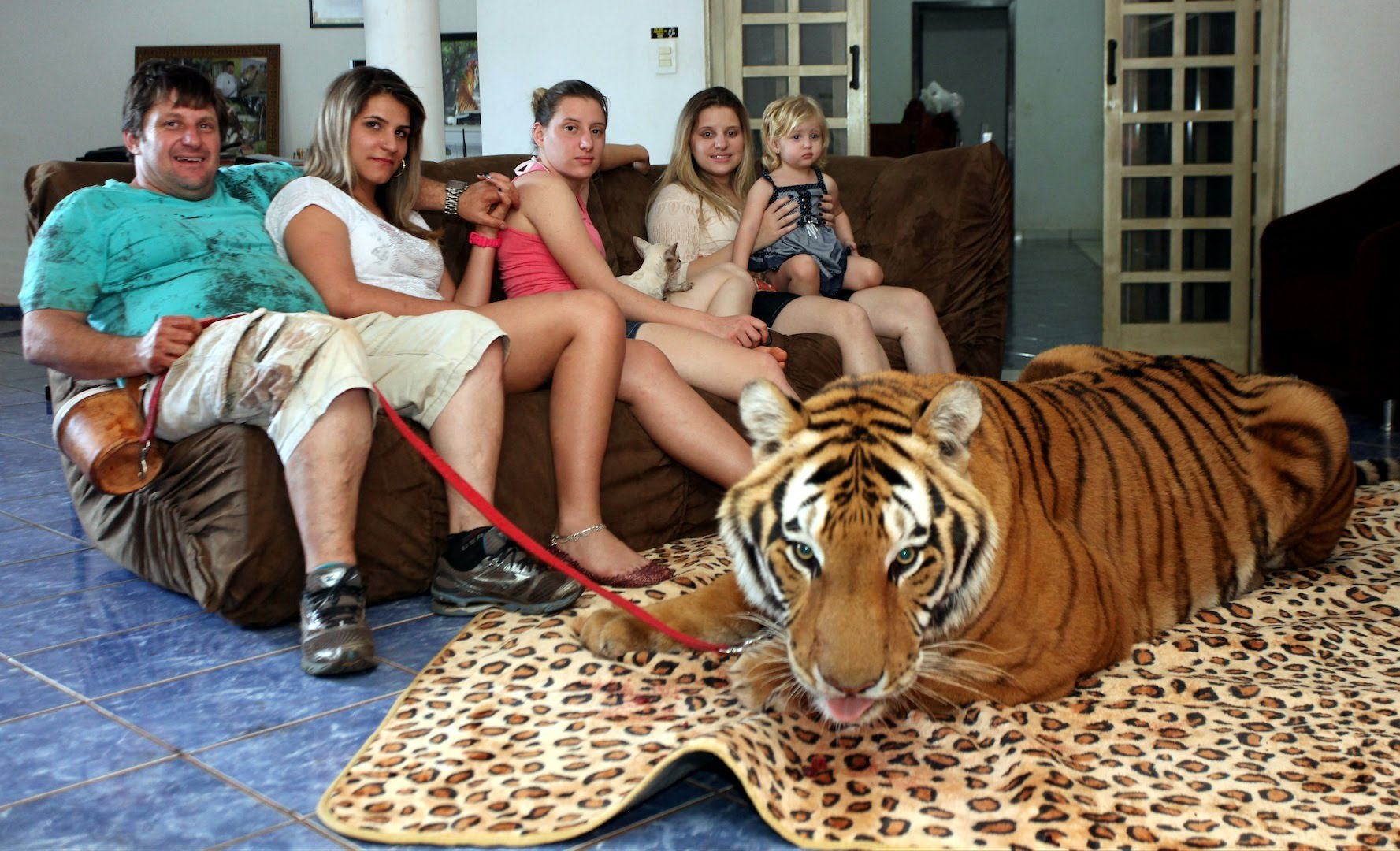 Family living with tigers !