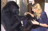 Talking monkey !