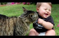 Funny cats.. every cat has its day !