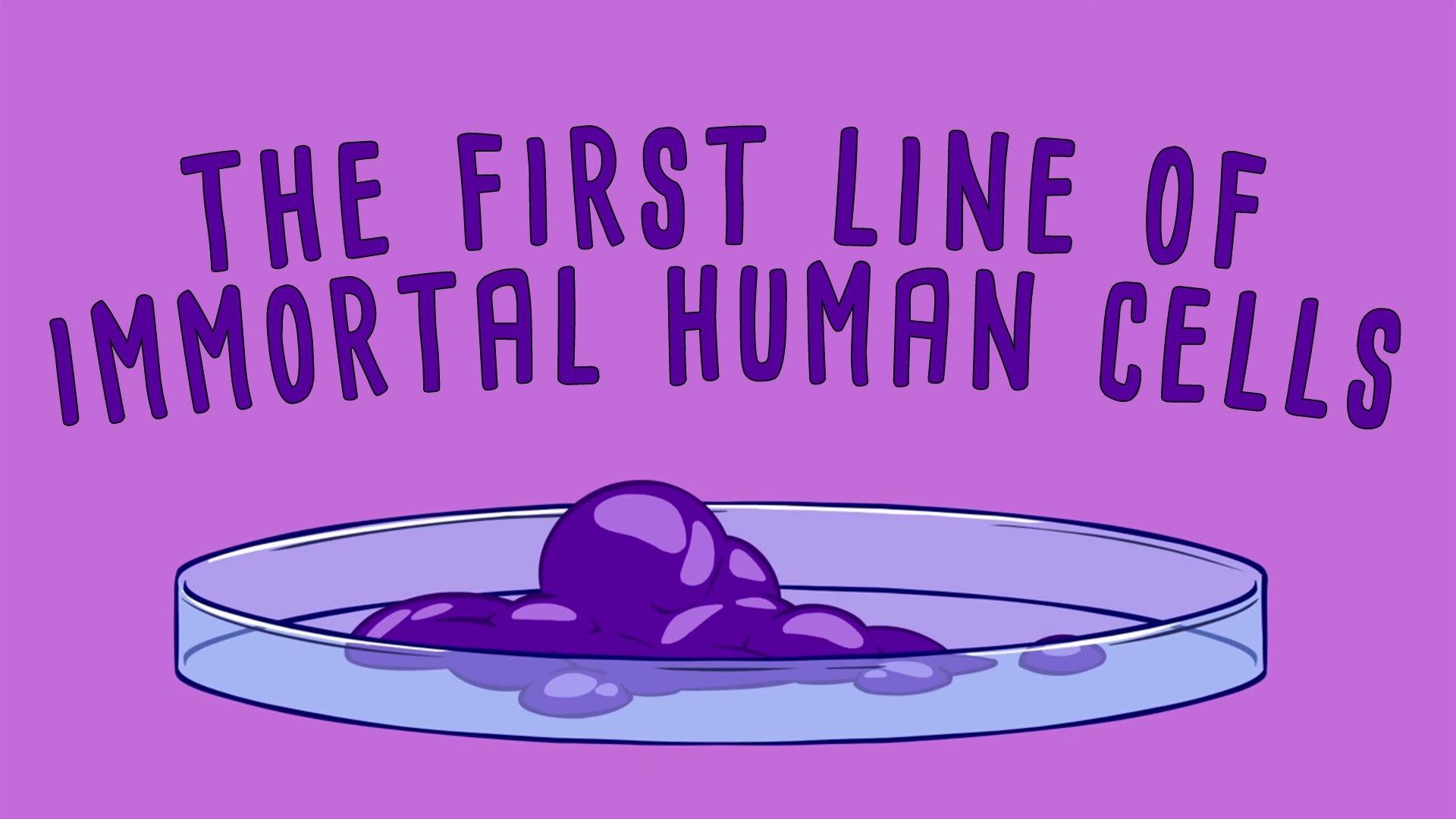 The immortal cells of Henrietta Lacks – Robin Bulleri TED-Ed  TED-Ed